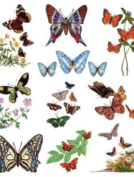 Изобилие бабочек